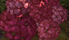 Cj secret garden hydrangea planter 02 03
