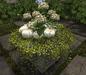 CJ Secret Garden Hydrangea Planter 03