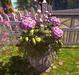 CJ Secret Garden Planter with Hydrangea pink
