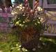 CJ Secret Garden Planter with Hydrangea cream