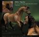 Teegle Texture Pack - Zebra Bay Dun - The Texture Barn