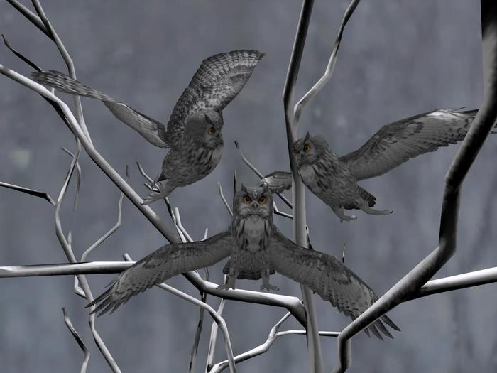 Owl gray box (WEAR)