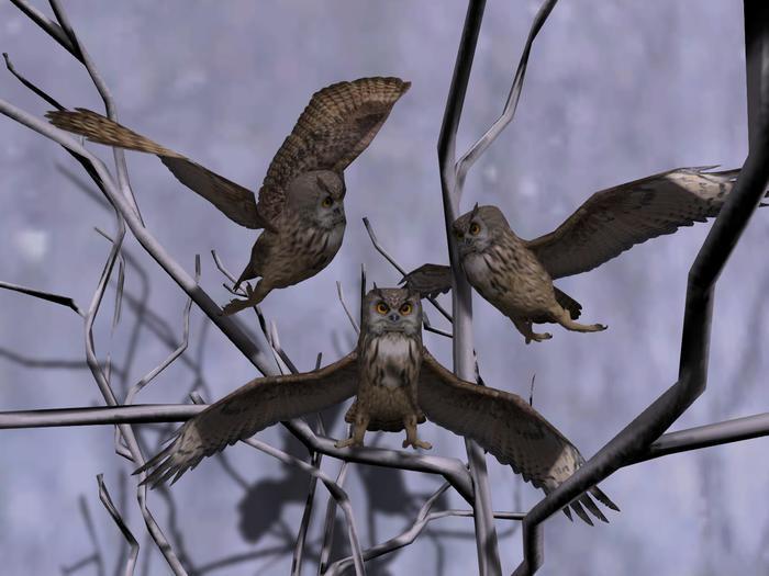 Follower big horned owl brown