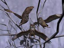 Follower owl brown box (WEAR)