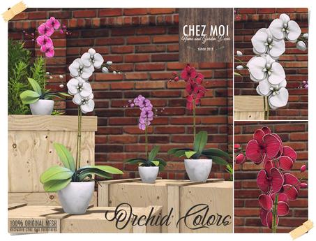 Orchid Colors ♥ CHEZ MOI