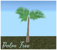 Palm Tree  Casa D.