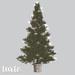 tarte. portland christmas tree (evergreen)