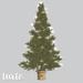 tarte. portland christmas tree (fir)