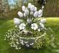 CJ Tulip white in Cement Planter ~ c + m ~