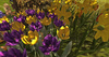Cj spring fawn set 06
