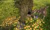 Cj spring fawn set 07