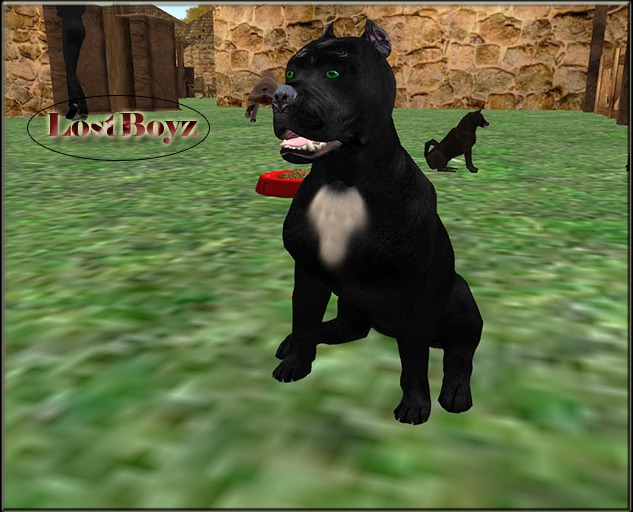 BB BioBreeds Rare 2X Grand PitBull puppy unbirthed Ready for Your Home