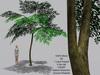 Spring Tree LI=1 { Mesh Promo }