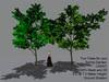 Albizia Tree - Spring { Mesh Promo }