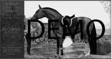 Cheval D'or - WHRH Warmblood DEMO - Pro Collection Set.