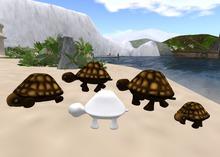 Turtle (Full Perm)