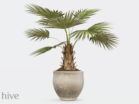 hive // potted fan palm plant [wear to unpack]