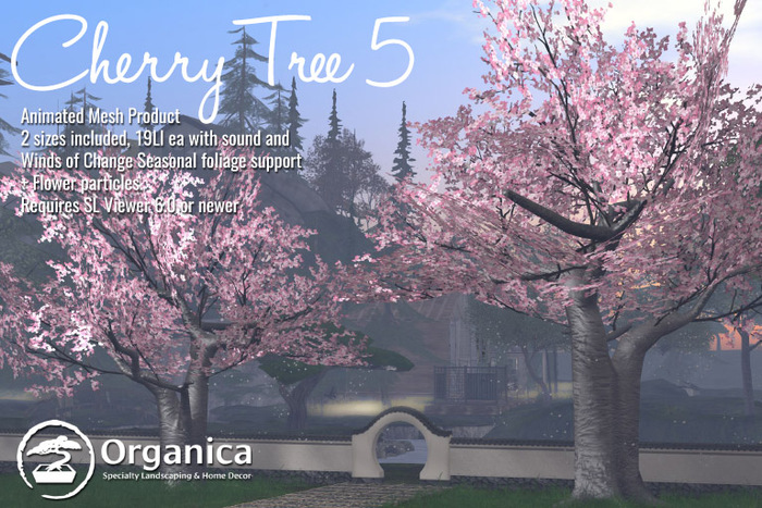 [ Organica ] Cherry Tree 5