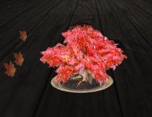*M* red bonsai maple  by mammu