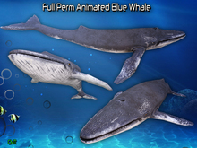 Full Perm Amazing Animated Young Blue Whale V2 Mesh
