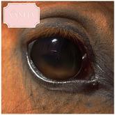 Tutto E Vanita Depths Hazelnut eyes for Teegle