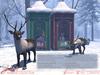 JIAN Reindeer Collection