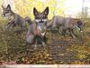 JIAN Gray Fox Collection