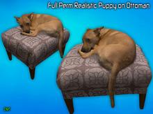 Full Perm Realistic Puppy on Ottaman Mesh