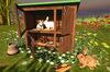 Cj hutch with bunny family 02