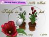 Spring Tulips  in pot, w_001TK_6