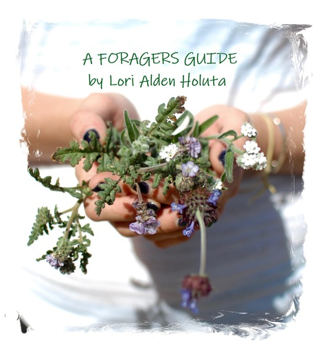 A Forager's Guide - A Werk Book