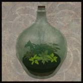 EF-Home: Carboy Bottle Garden
