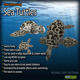 Sea Turtle Family (Free-Swimming)