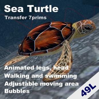 Walking and swimming Sea turtle