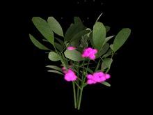 {Papillon} Small Mysterious Mistletoe