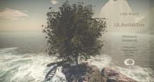 BurOak Tree Animated 6 Seasons