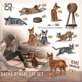 [Rezz Room] Box Bengal Cat Play