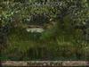 Celtic myst nature pond