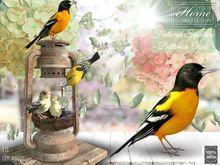 bird,nest
