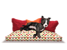 DOG BED - MIMMI <3   wuff