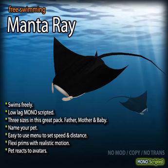 Manta Ray (Free-swimming)
