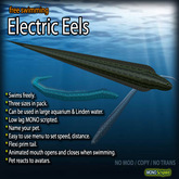 Electric Eels (Free-Swimming)