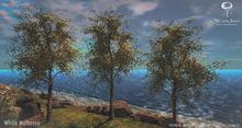 LB WhiteMulberry Tree Animated 4 Seasons