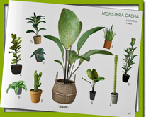 MINIMAL - Monstera Plant *6*