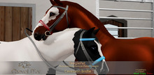 Cheval D'or - TeeglePet - Cavesson Bridle.