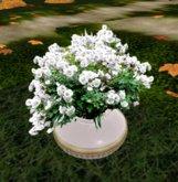 *M* 2 prim white rose bush in vase  by mammu