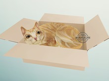 (fd) Cat - 16 Curled In Box RARE