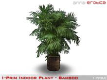 Anna Erotica - ONE PRIM Indoor Plant! (bamboo)