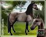 """Champion"" Texture Kit - Teegle Horse/Teeglepet"