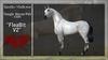"*RMH* Teegle Horse/Pet coat ""FleaBitV2"" -Boxed"